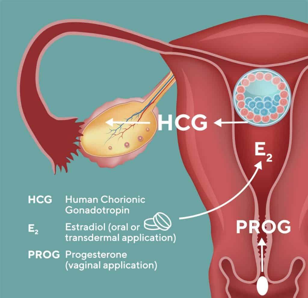 Pregnancy after egg donation / embryo adoption